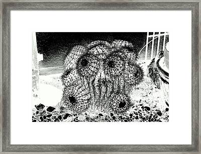 My Anguish In The Face Of A Barrel Cactus Framed Print by Antonia Citrino
