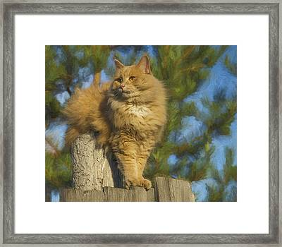 My Cat Framed Print