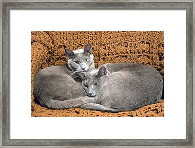 Nap Time Framed Print by James Steele