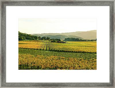 Napa Valley California In Autumn Framed Print by Brandon Bourdages