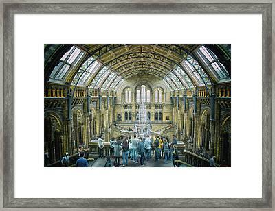 Natural History Museum London Framed Print