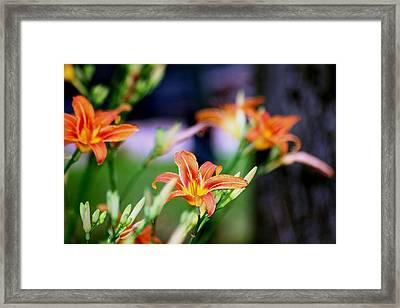 Nature 1 Framed Print by Paul SEQUENCE Ferguson             sequence dot net