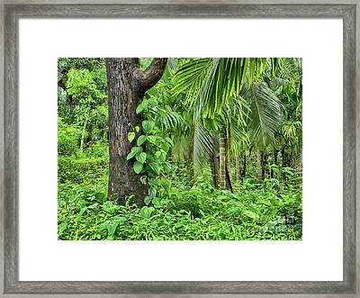 Framed Print featuring the photograph Nature 7 by Charuhas Images