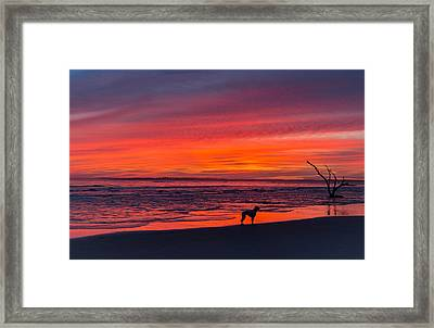 Nature Framed Print by RC Pics