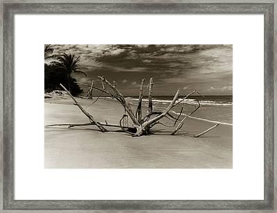 Nature Sculpture Framed Print