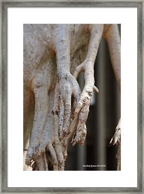 Nature Framed Print by Shelley Jones