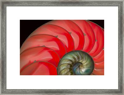 Nautilus Framed Print by Jean Noren