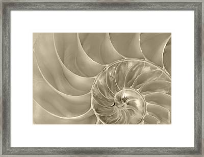 Framed Print featuring the photograph Nautilus Shell by John Hix