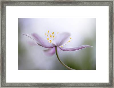 Nemorosa Framed Print