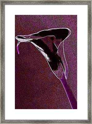 Neon Calla Lilly 5 Framed Print by Gary Brandes