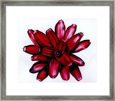 Neoregelia 'christmas Cheer' Framed Print by Penrith Goff