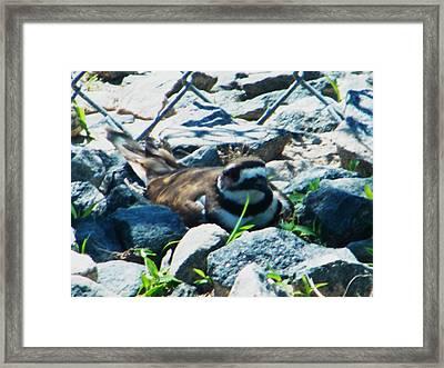 Nesting Framed Print by Nereida Slesarchik Cedeno Wilcoxon