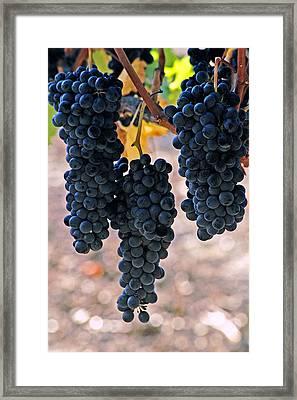 New Grapes Framed Print
