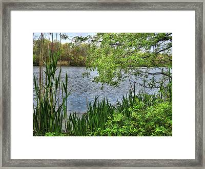 New Life Framed Print by Mikki Cucuzzo