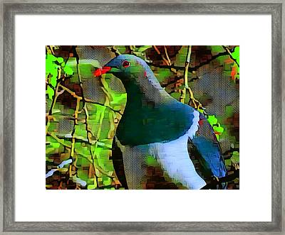 New Zealand Wood Pigeon Framed Print