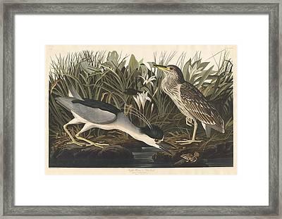 Night Heron Or Qua Bird Framed Print by Rob Dreyer
