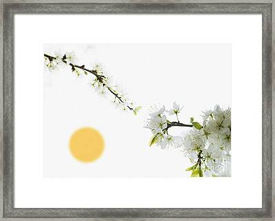 No Winter Lasts Forever Framed Print by Celestial Images