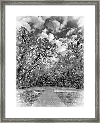 Oak Alley 7  Framed Print