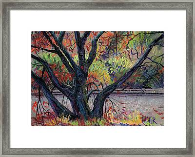 Oak In Niles Canyon Framed Print by Donald Maier