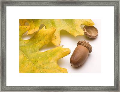 Oak Leaves And Acorns Framed Print by Utah Images