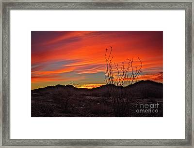 Ocotillo Sunrise Framed Print by Robert Bales