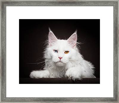 Odd Eye Framed Print