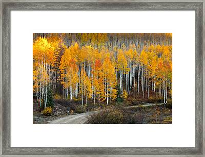 Off The Beaten Path Framed Print by Tim Reaves