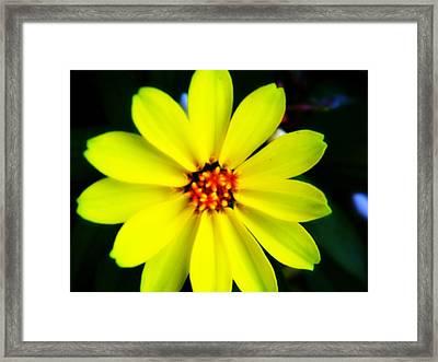 Oh Sunny Day Framed Print by Hannah Miller