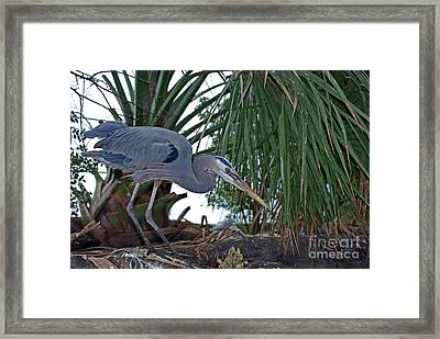 Old Blue Framed Print