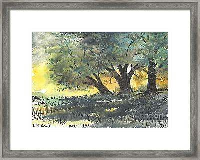 Old Oaks Framed Print