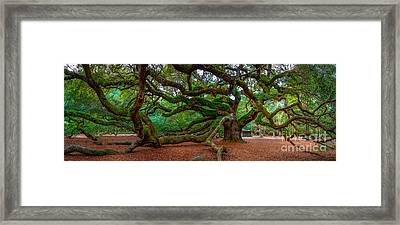 Old Southern Live Oak Framed Print