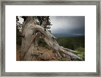 Old Tree On The Mountain Framed Print