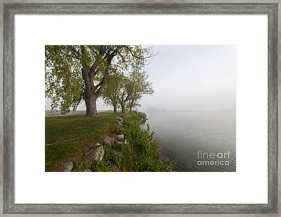 Old Trees On Foggy Shore Framed Print by Elena Elisseeva
