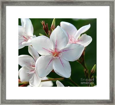 Oleander Harriet Newding  2 Framed Print