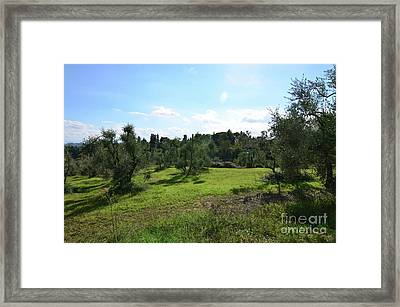 Olive Grove In The Countryside Of Tuscany Framed Print by DejaVu Designs