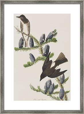Olive Sided Flycatcher Framed Print by John James Audubon