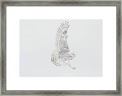 On The Move. Framed Print
