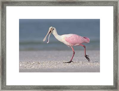 On The Move Framed Print by Jim Gray