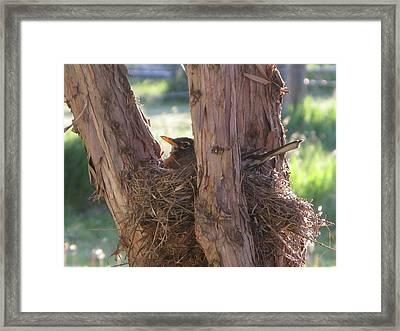 On The Nest Framed Print