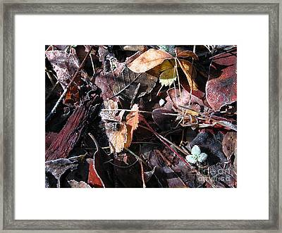 On The Path To Loveland II Framed Print by Donna Stewart