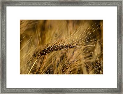 One In A Million Framed Print by Omer  Vautour