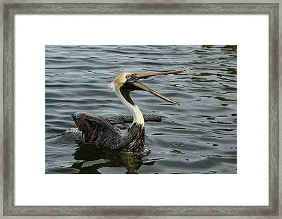 Framed Print featuring the photograph Open Wide by Jean Noren