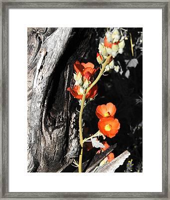 Orange Beauty Framed Print by Jessica Boone