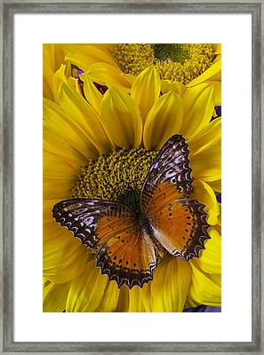 Orange Butterfly On Sunflower Framed Print by Garry Gay