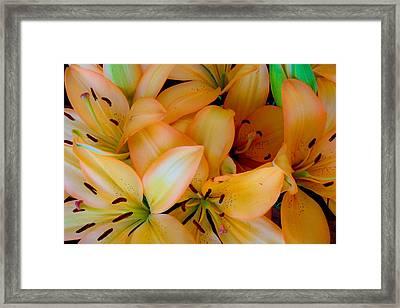 Orange Lilies Framed Print
