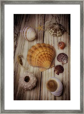 Orange Sea Shell Framed Print by Garry Gay
