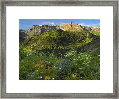 Orange Sneezeweed And Indian Paintbrush Framed Print by Tim Fitzharris