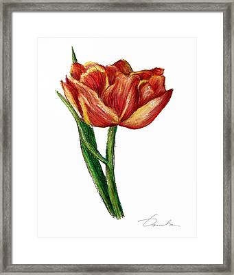 Orange Tulip Framed Print
