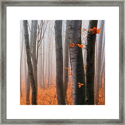 Orange Wood Framed Print by Evgeni Dinev