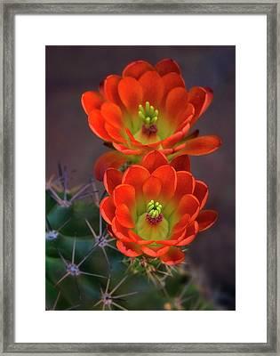 Framed Print featuring the photograph Orange Ya Beautiful  by Saija Lehtonen